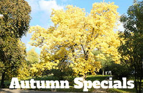 sophies hostel prague autumn specials