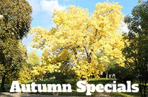 sophies hostel prague autumn specials